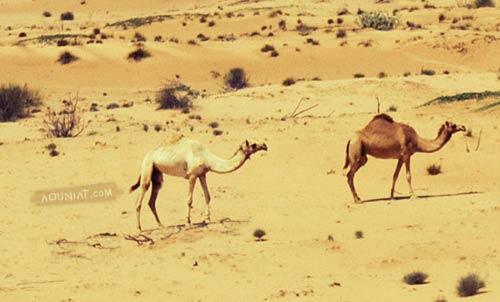 جمال الصحراء - أول صورة ألتقطها بكاميراتي الجديدة