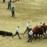 تعذيب الحيوانات والتسميات عديدة